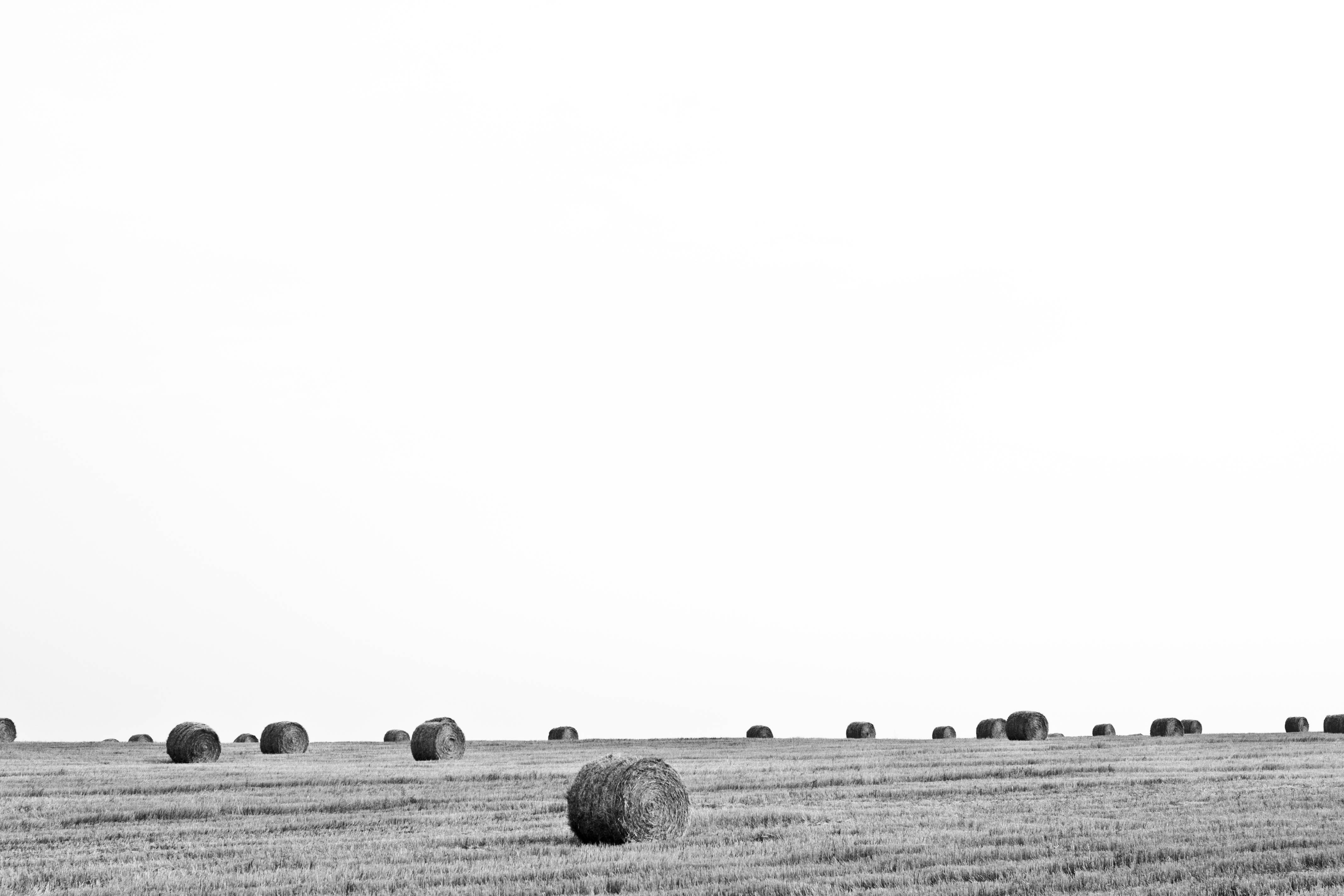 Bales of Straw, field, wheat, gold, sunset, black and white