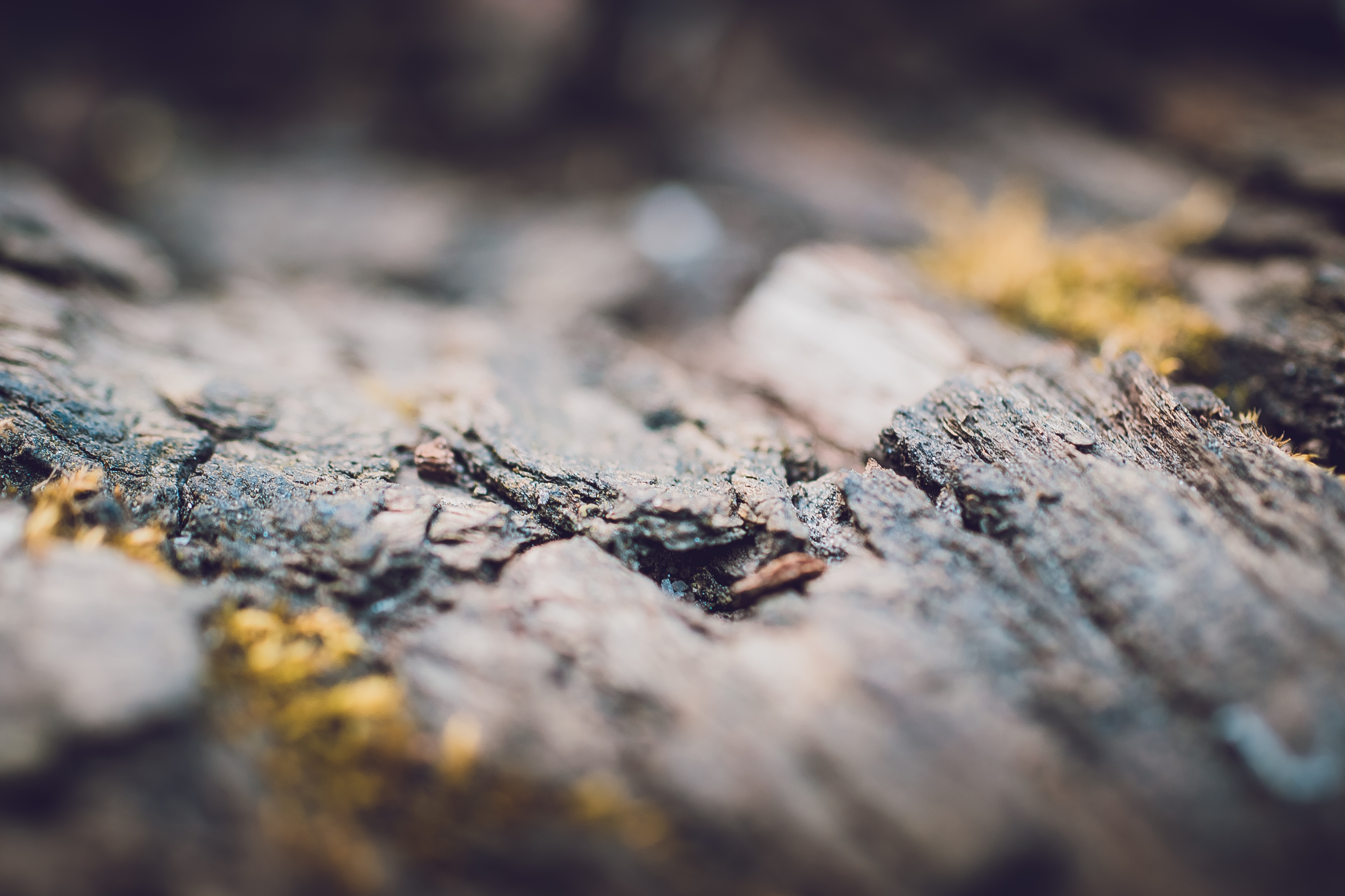Fault, trunk, branch, bark, wood, moss, focus, tree