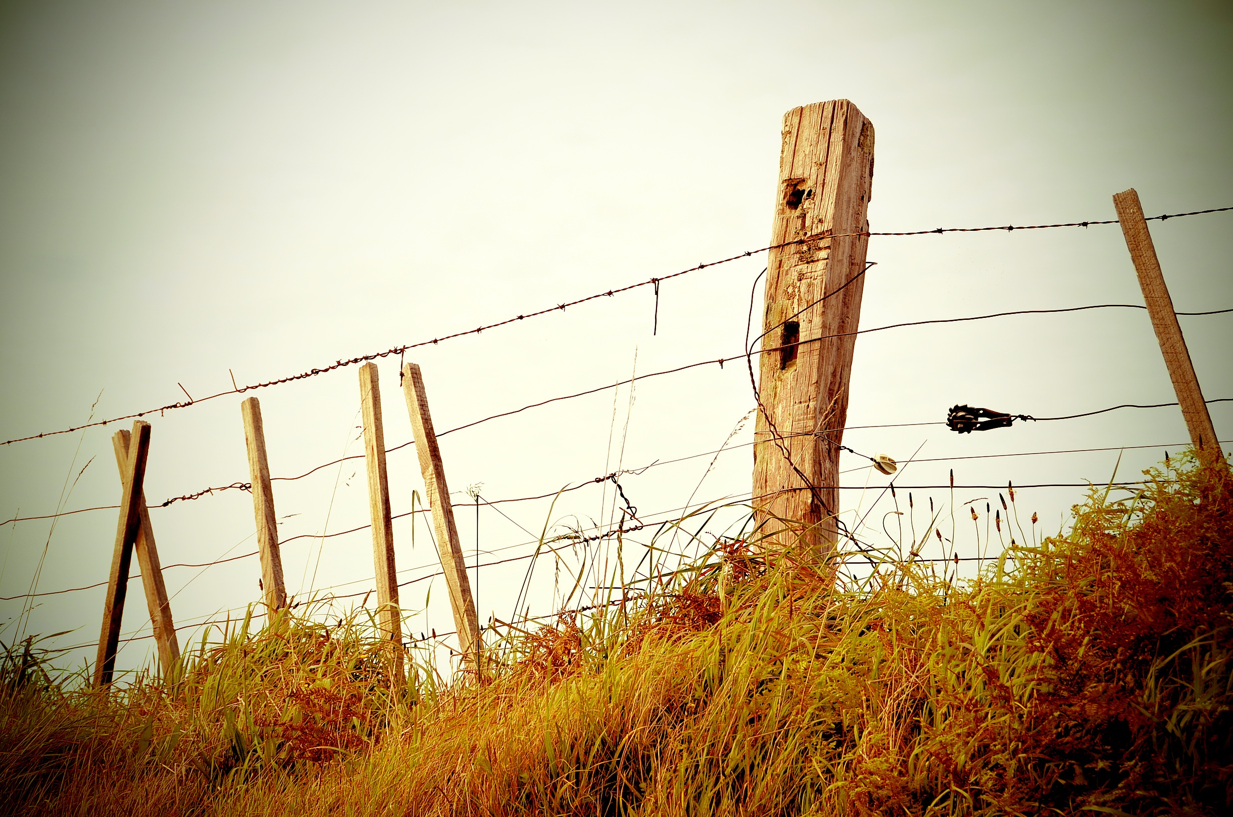 Fence, poles, field, wire, nature, weed