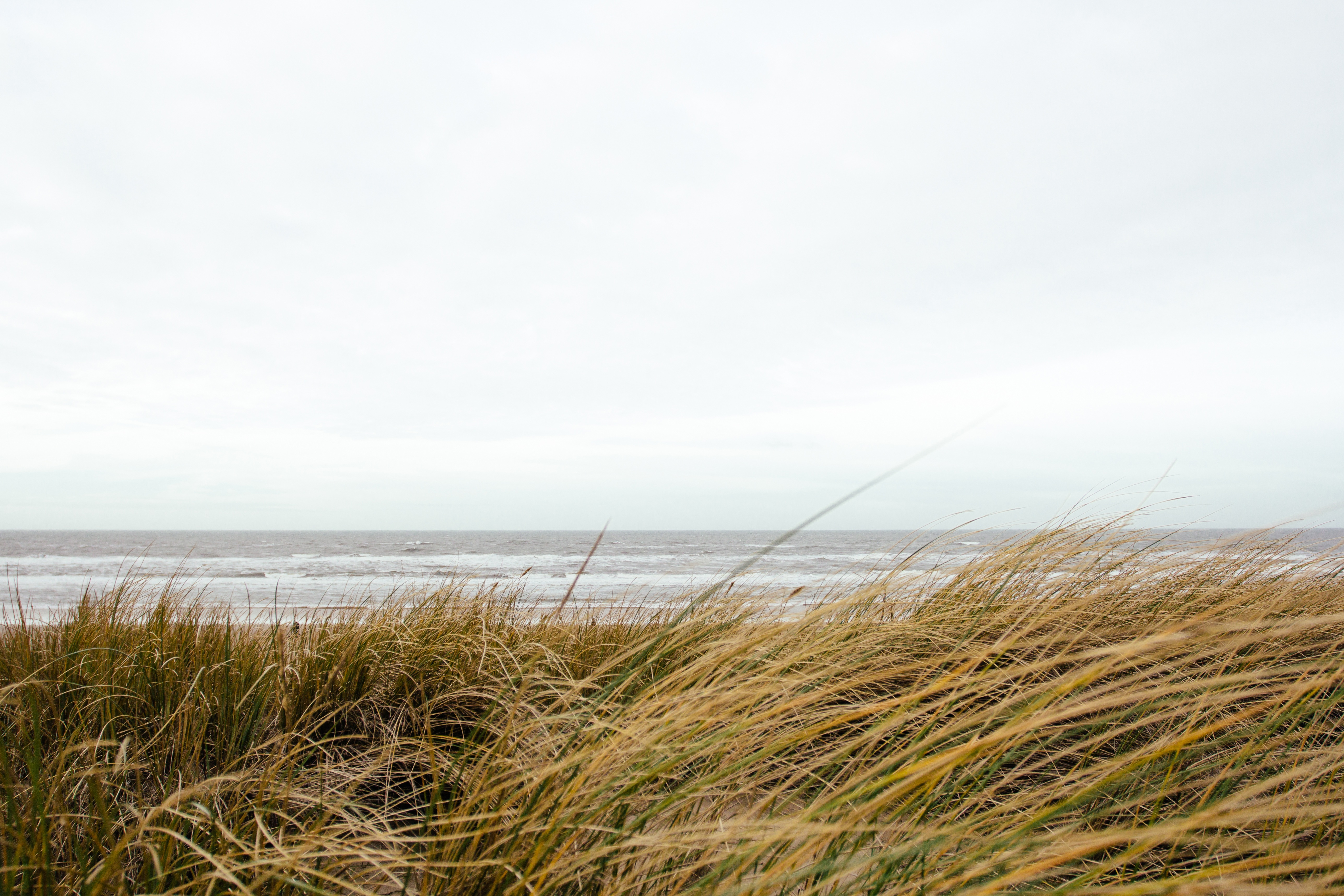 Grass, cold, sea, beach, cloudy, lonely, melancholy
