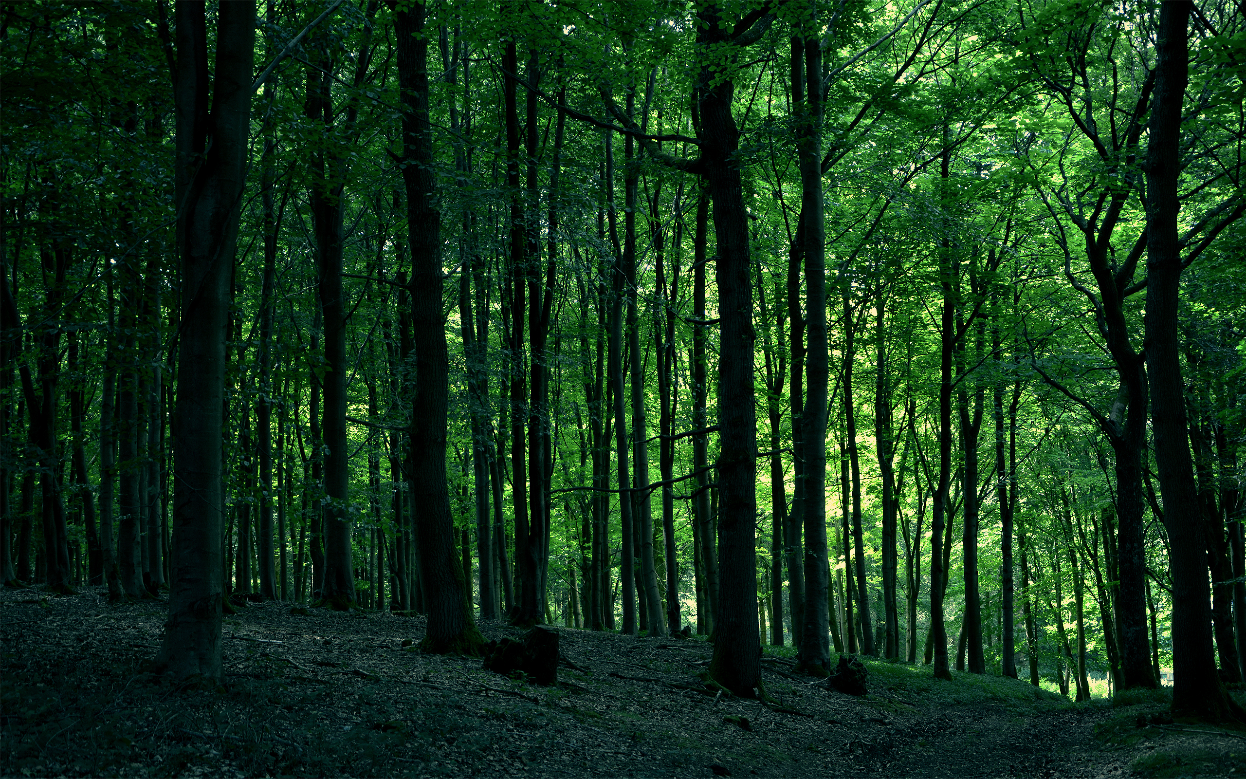 Hide, organic, nature, trees, forest, green, living, outside, life