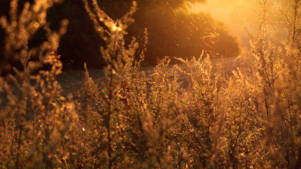 Outdoors, sunset, sun, light, outside, freedom, nature