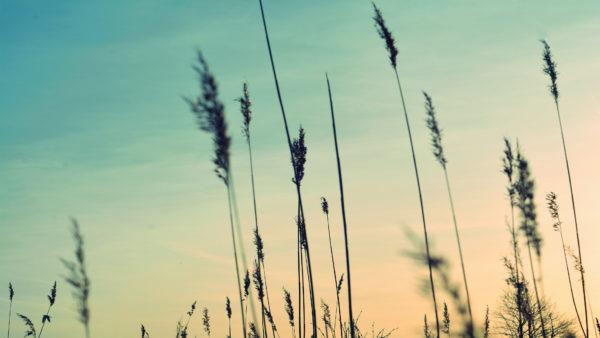 Smoth, sunset, vegetation, nature, outside