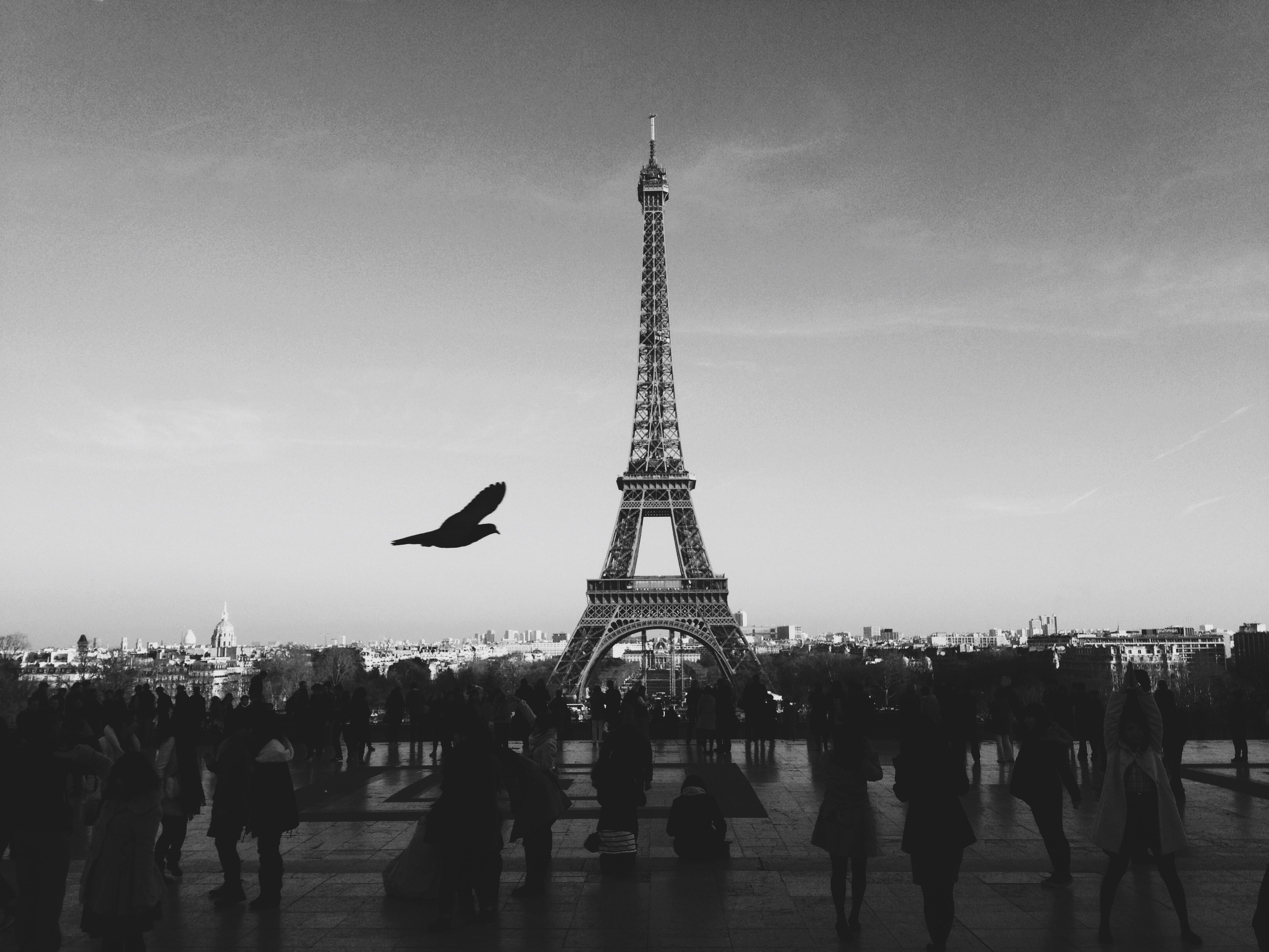 Eiffel Tower, Paris, people, iron, black and white, tower, Eiffel, dove