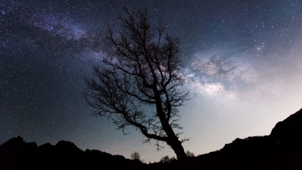 Milky Way, tree, space, sky, stars, shadow, landscape, nature, beauty