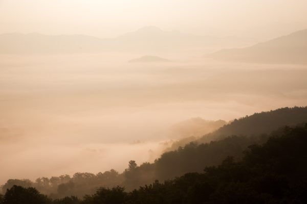 Fog in the forest, moist, jungle, mountains, trees, clouds, steam, sunrise