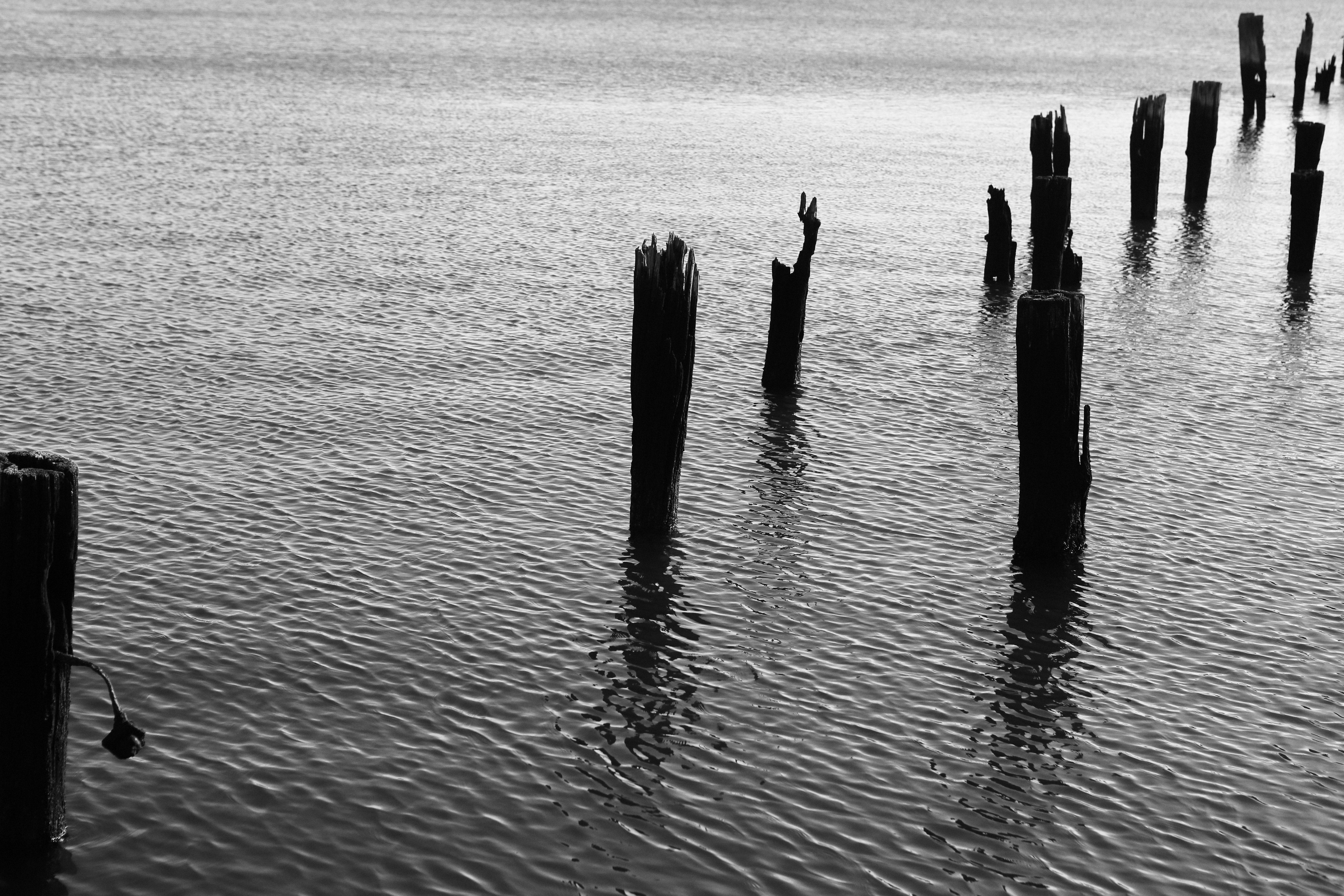 Trunk wooden pier, sea, lake, black and white, destroyed pier, old pier.