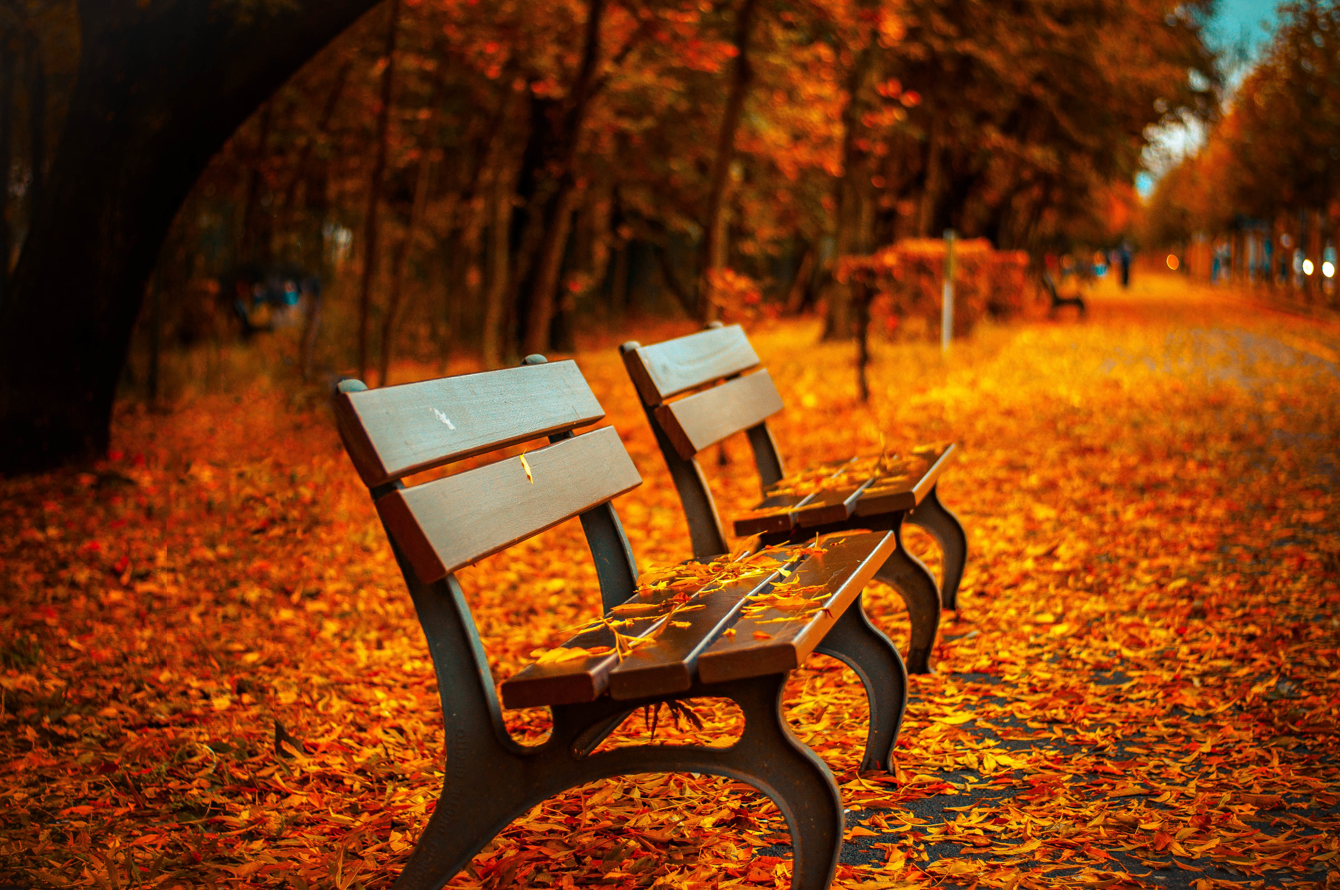 Autumn in the park, seat, dry leaves, leaves, yellow, fallen leaves, autumn, late autumn, park, ojas, banking