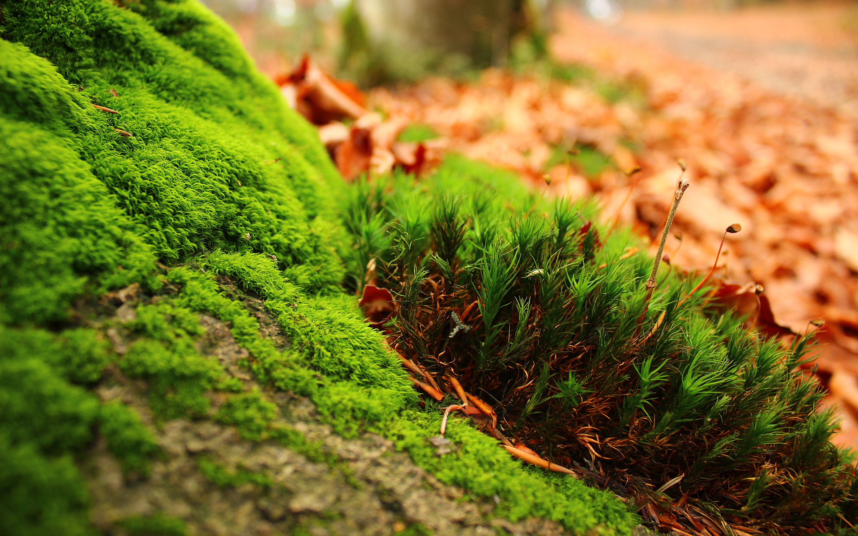 Greenish by PietruH, vegetation, moss, mold, nature, forest