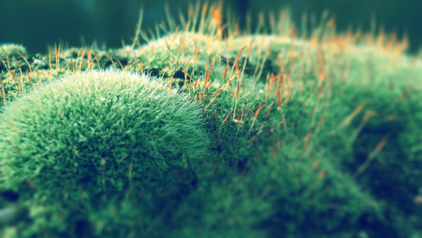 Musgo by givesnofuck, moss, nature, green, mold, mildew, life, close-up