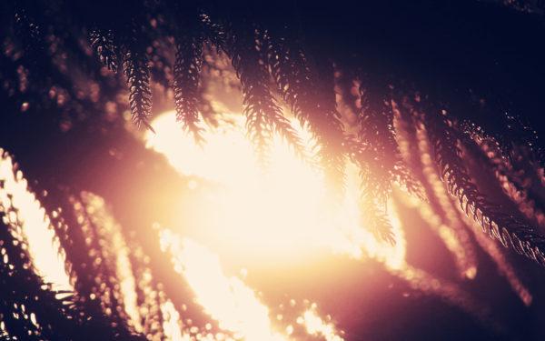 Silhouttes by Slurpaza, sun, sunset, sunshine, vegetation, branches, tree, plant, nature