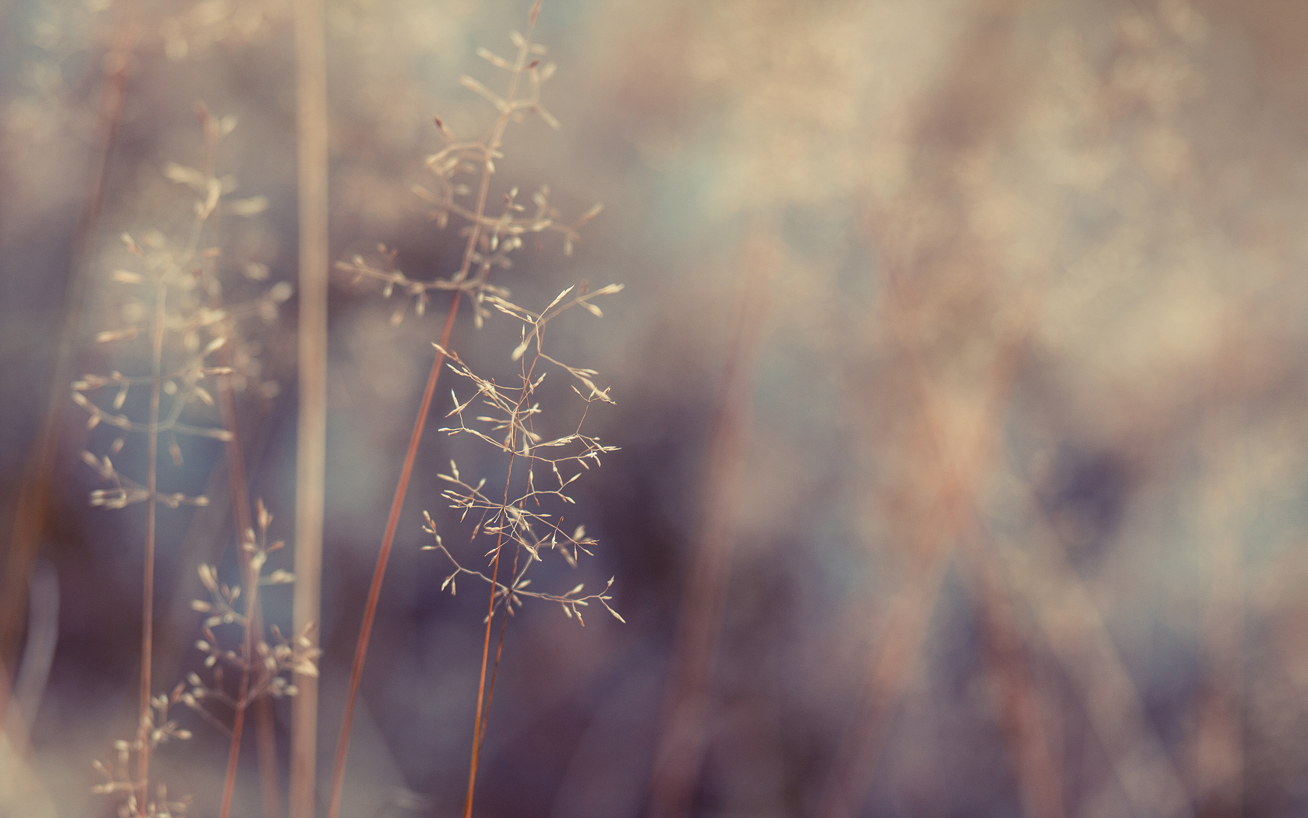 About October by enyoku, field, vegetation, weeds