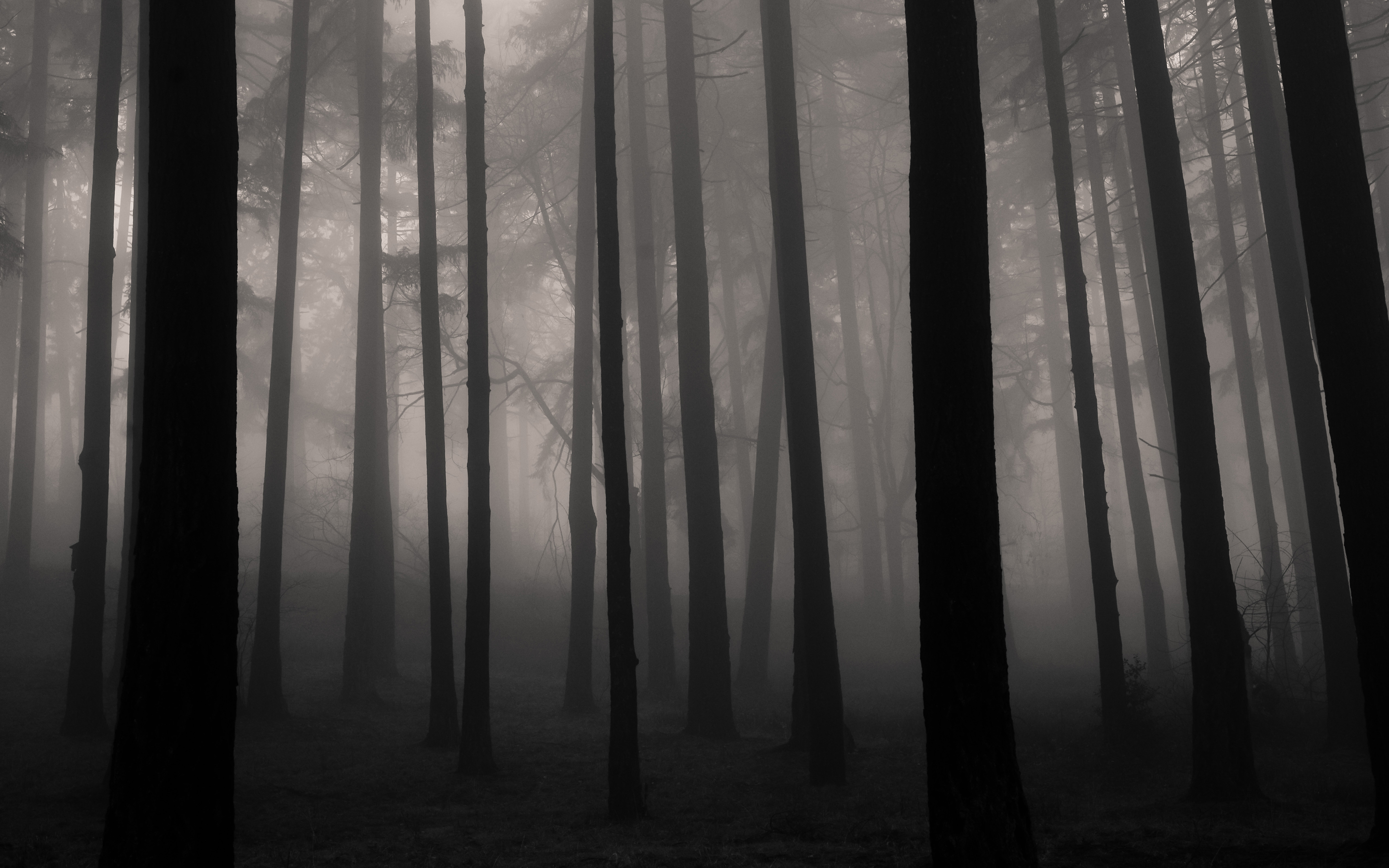 Fog in the Forest by Traveling Julie, forest, mist, fog, mystery, dark forest