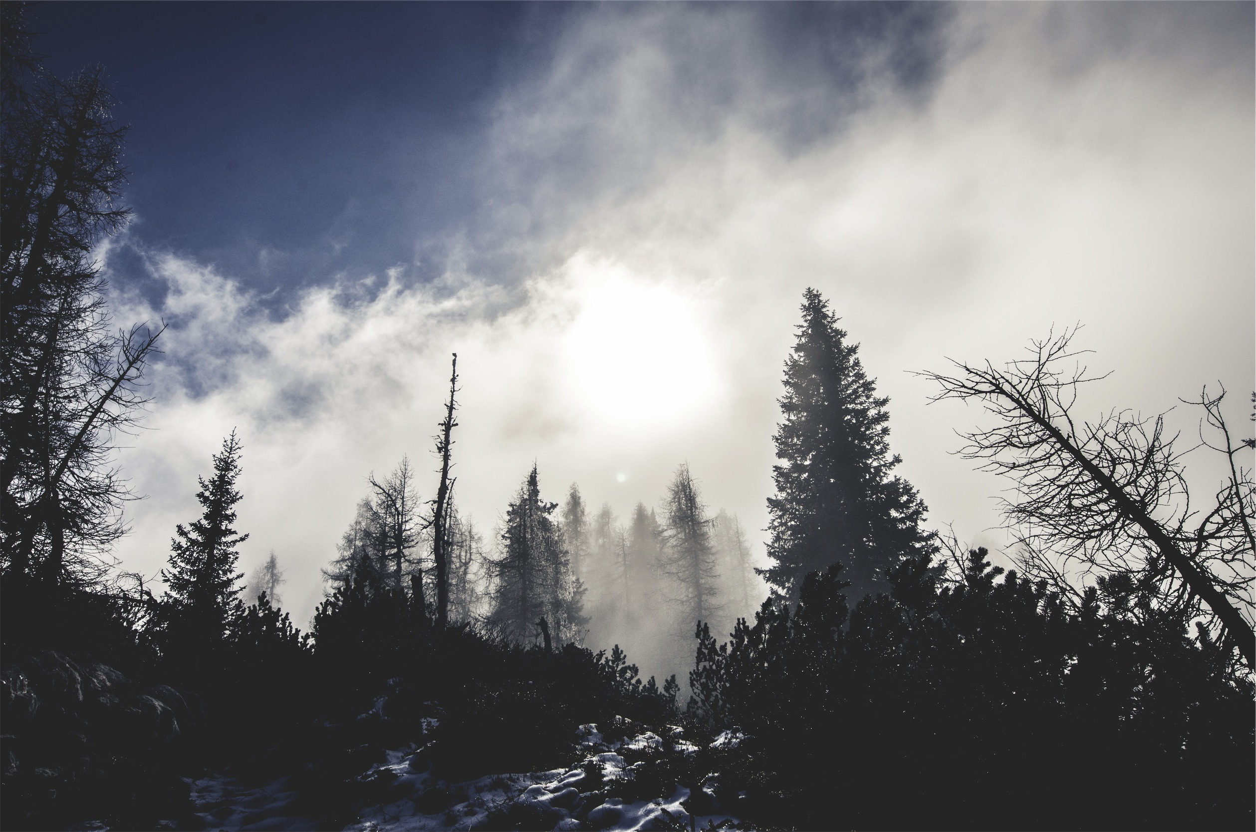 Invest forest, pine trees, snow, cold, fog, snow covered trees
