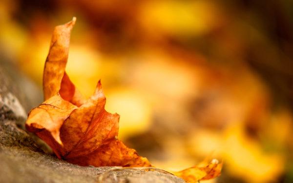Leaf by Prickor, leaf dry, leaf, leaves, autumn, yellow tones
