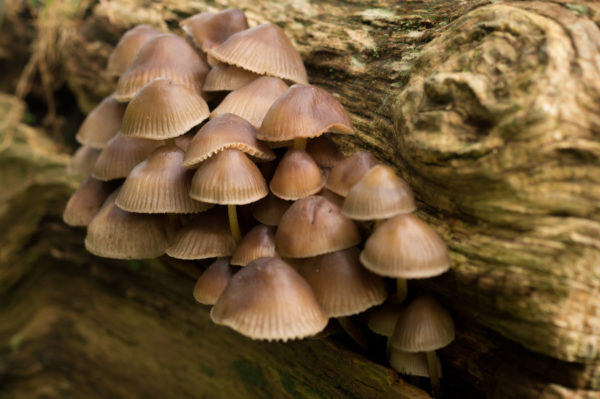 Mushrooms in the forest, fungi, forest, nature, life
