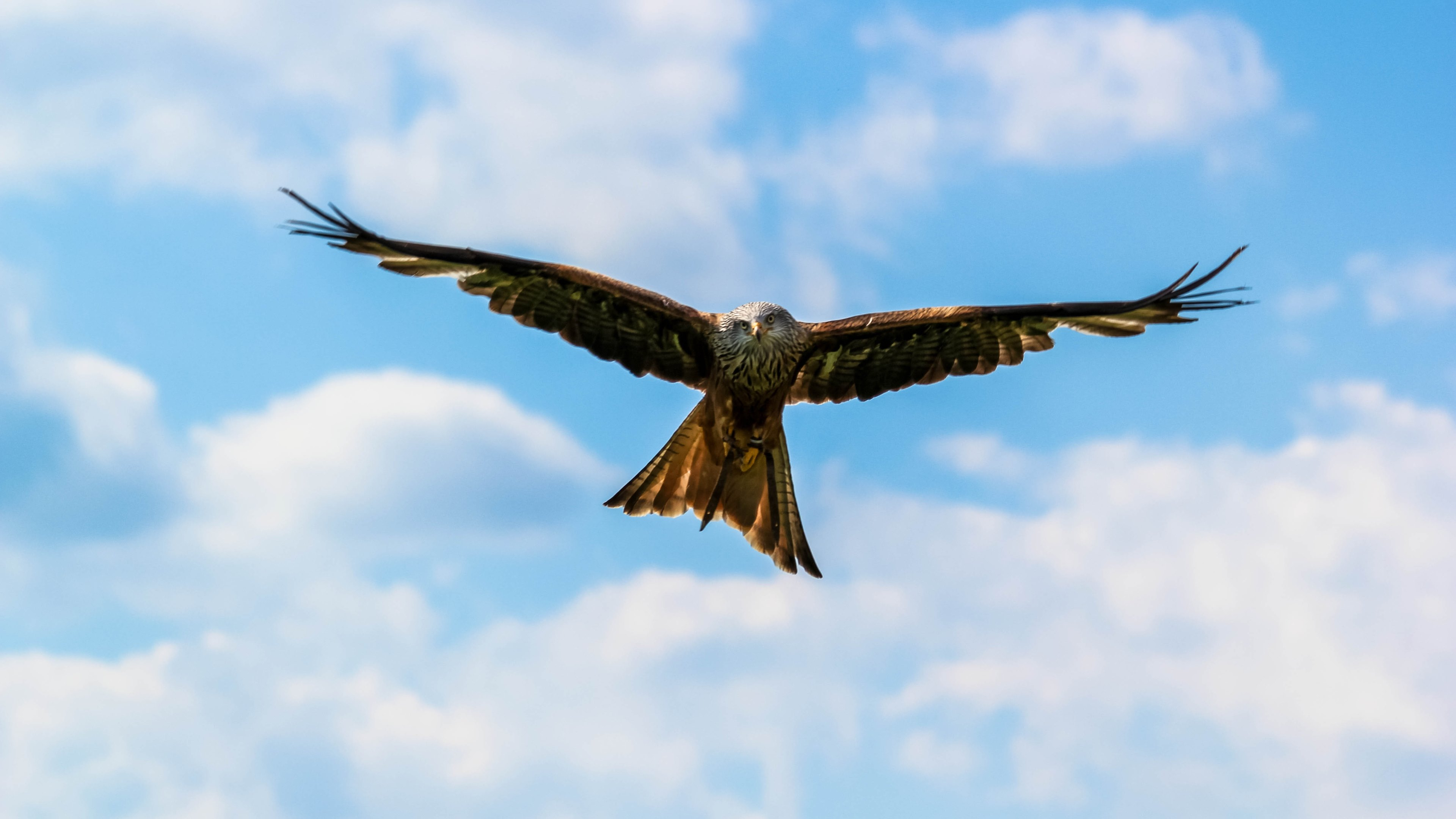 Picalls.com | Peregrine Falcon on the blue sky by Vasile ...