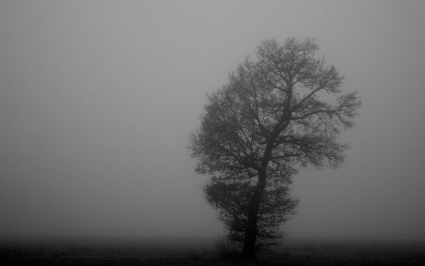 Solitary by CayaStrifee, fog, tree, fog, cold, winter, sunrise, early, morning, mist
