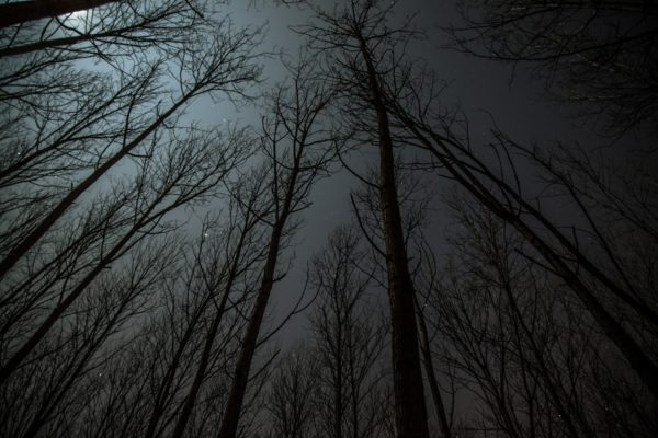 Skyfield From Forest, forest, sky, night in the forest, stars, night, trees, winter, branches