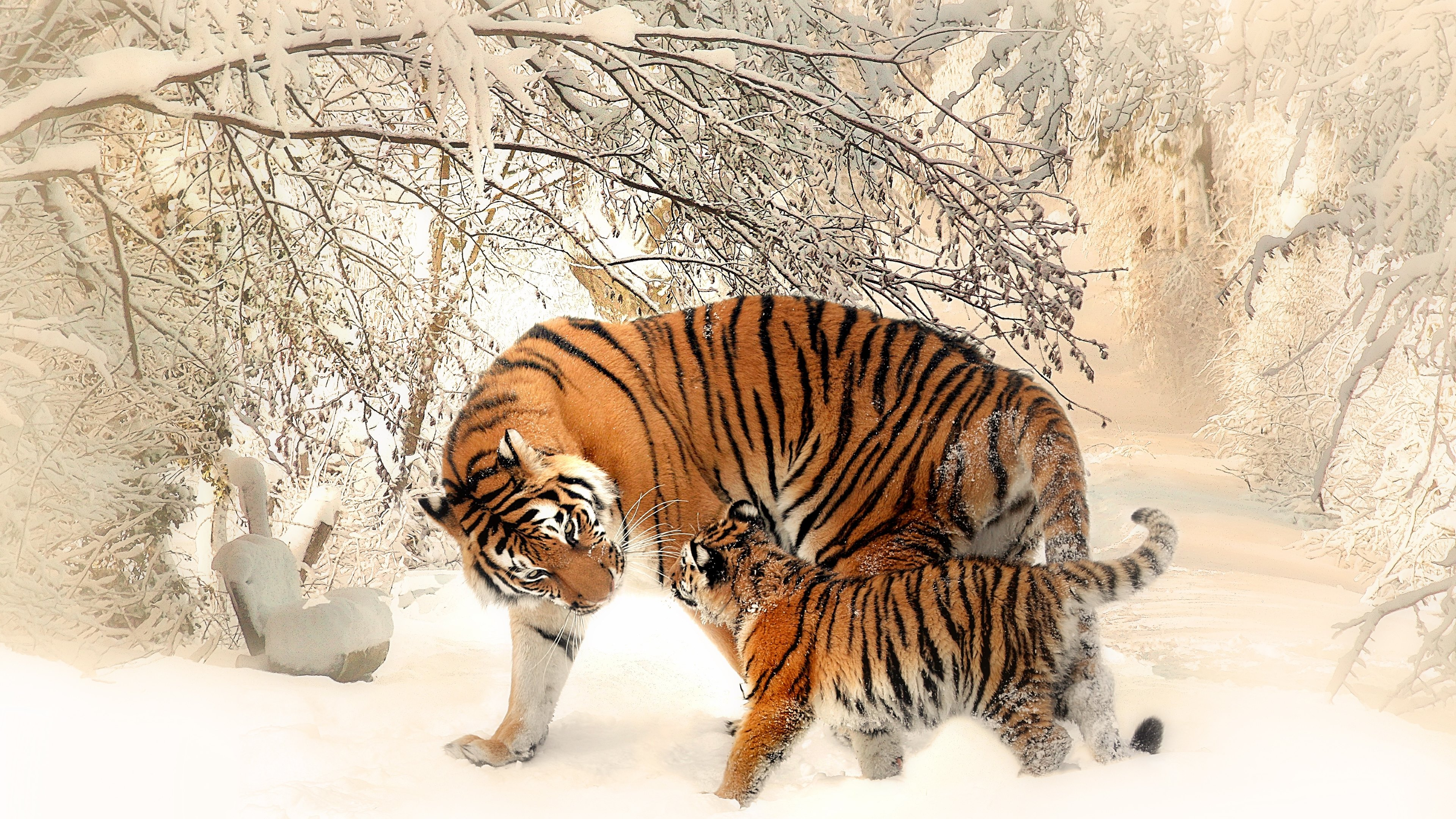 Mother and cub tigers by christine sponchia - Image d animaux gratuit ...