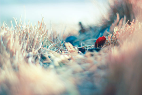 Colorful by i5yal, wallpaper, vegetation, nature, leaf, focus, out of focus