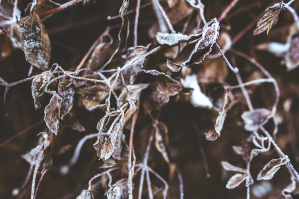 Leaves, winter, frost, cold, ice, brown, brown leaves, branches