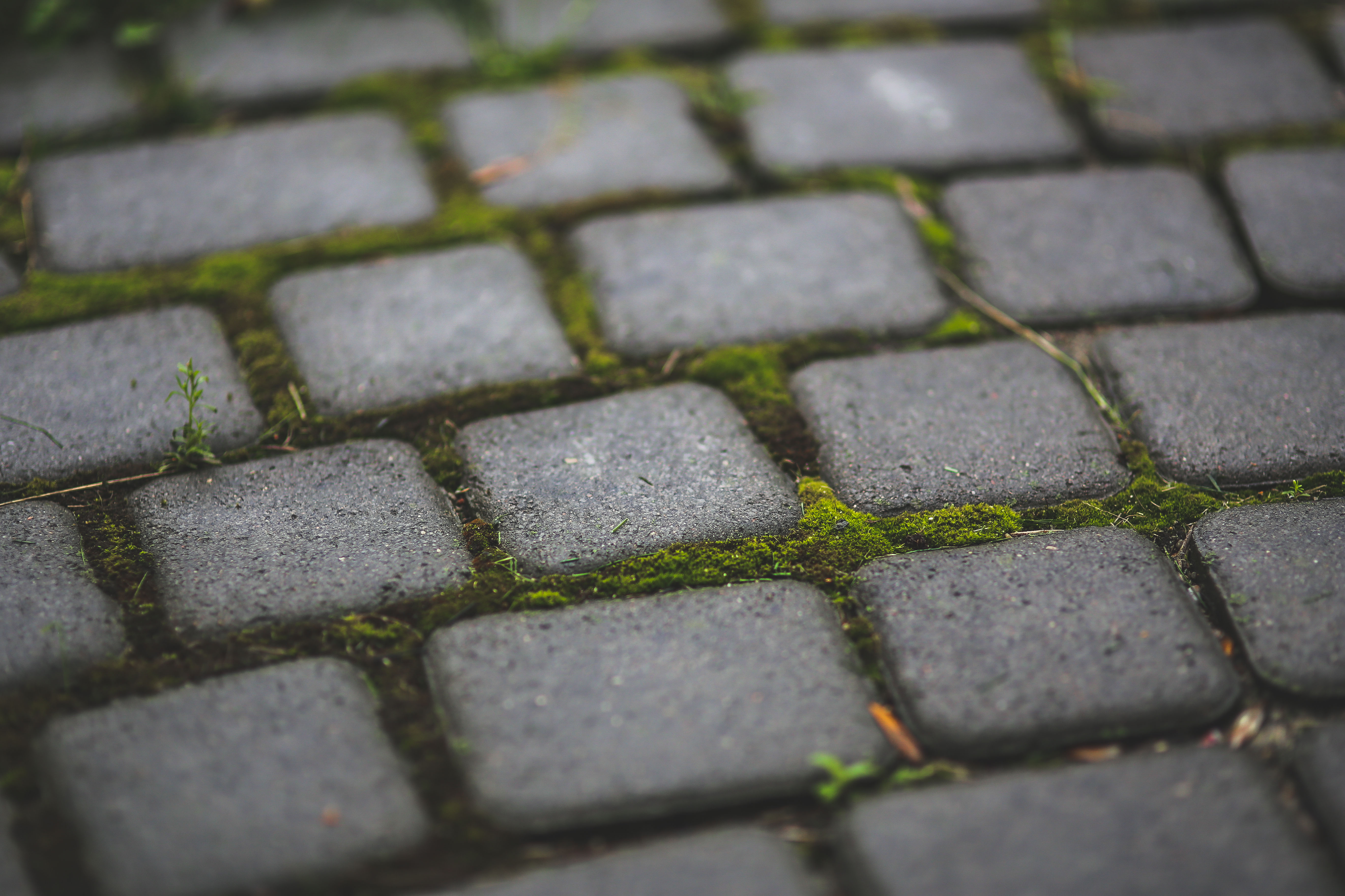 Paving stones with moss, road, rocks, pavers