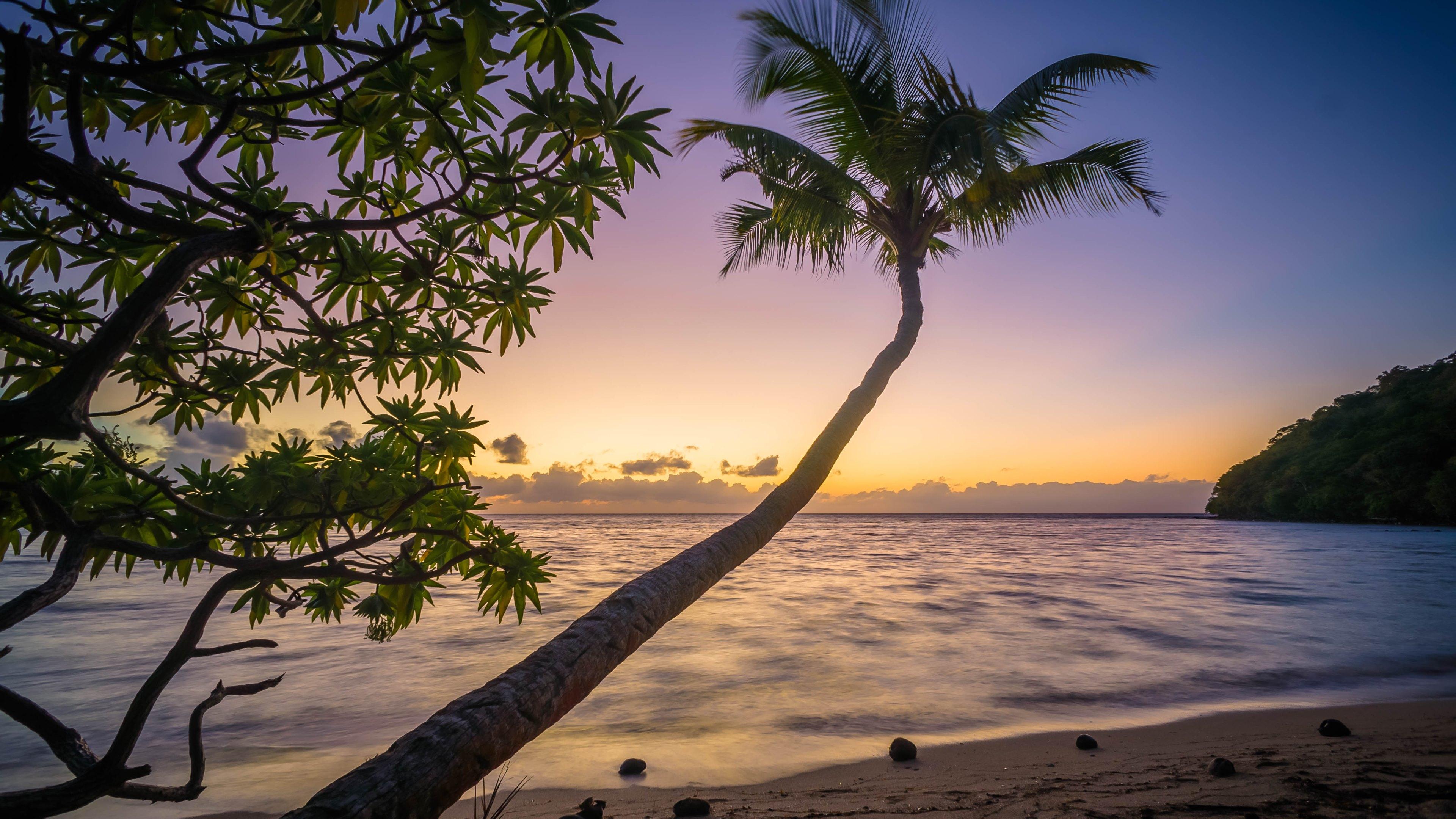 Exotic Holiday, beach, ocean, paradise, palm tree, sunset, coast, waves