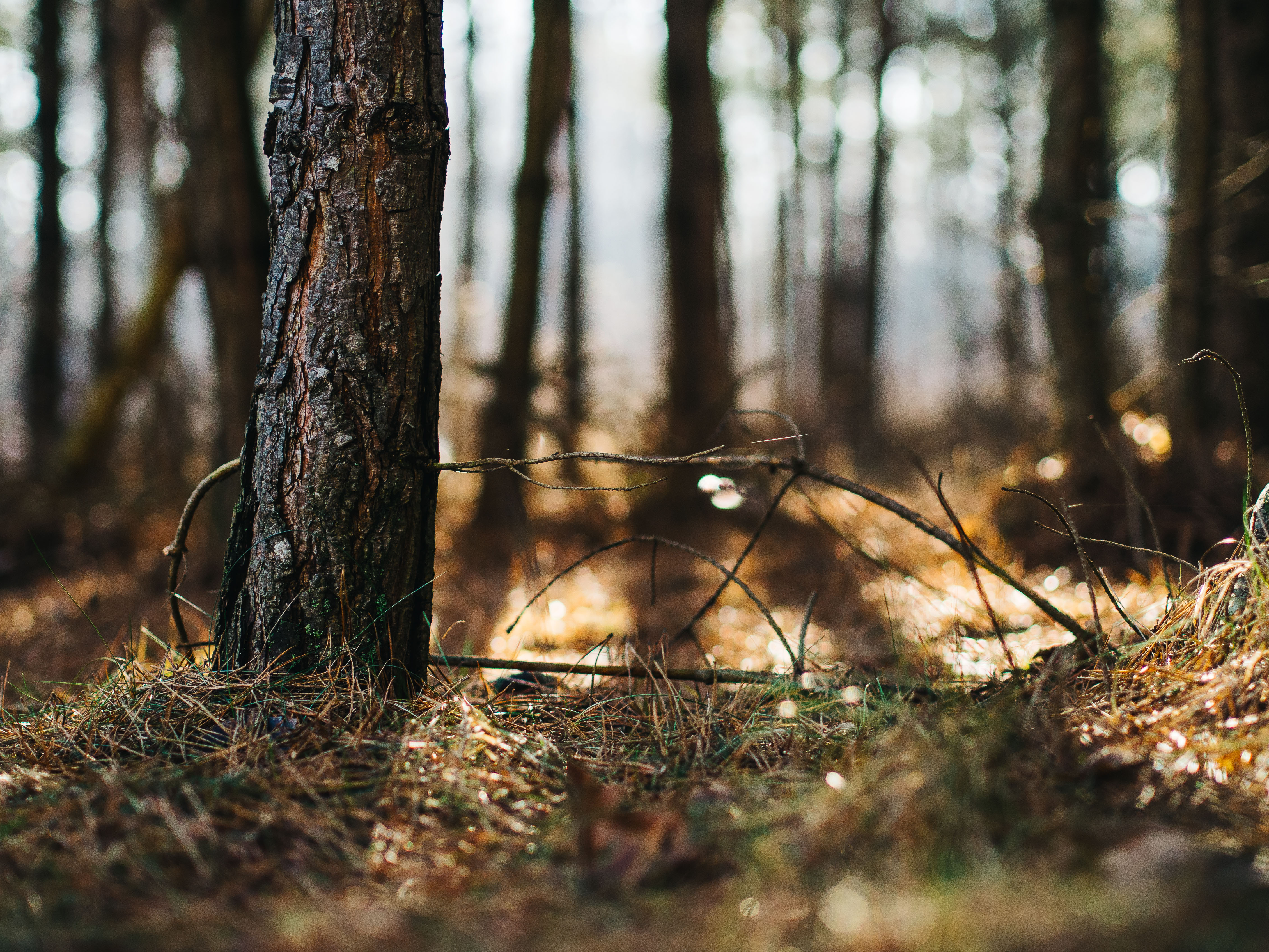 Natural forest, woods, outdoors, nature, afternoon, saturday, tree, sun, grass, bokeh, february