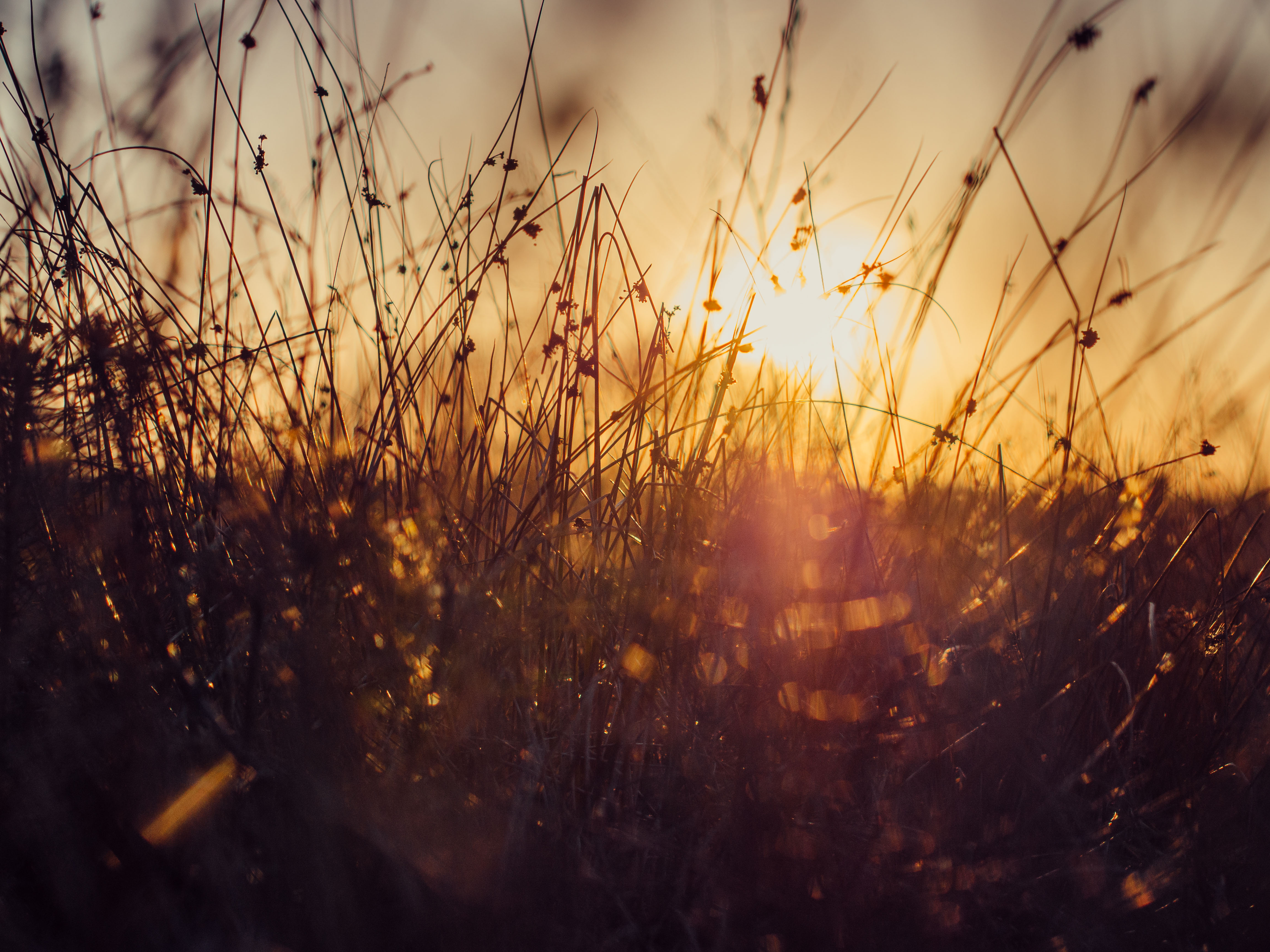 Sunset in the countryside, outdoors, nature, morning, evening, yellow, vegetation, countryside, sun