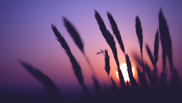 Time Goes by mskills, sunset, reeds, vegetation, sky, lilac, violet, shades