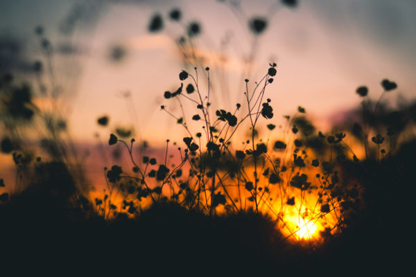 Dusk in nature, outside, field, sunset, dusk, silhouette, shadow, plants, flowers, garden, nature