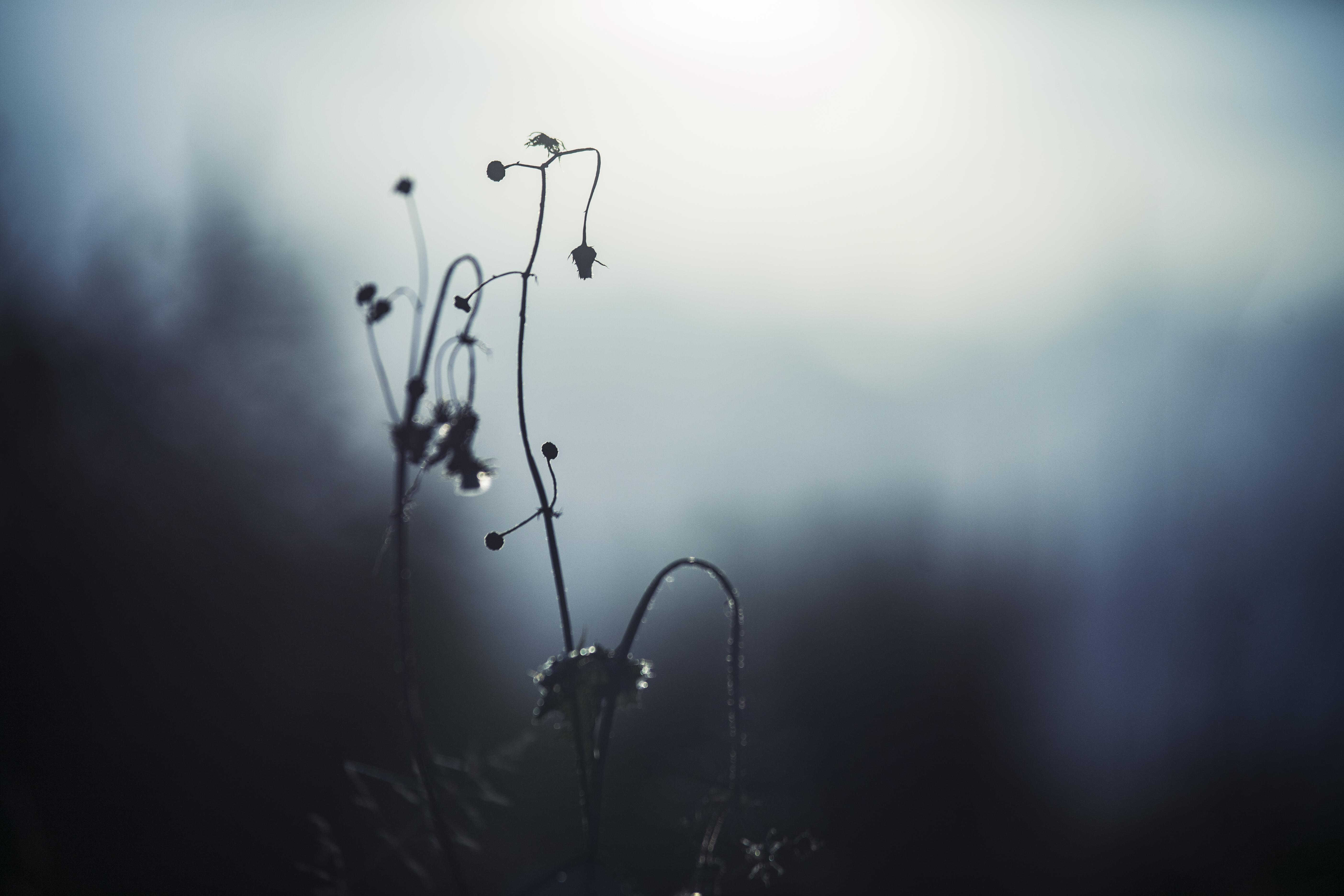 Plant Into The Mist, mystery, dead vegetation, cold, light, dry vegetation, dark blue fog