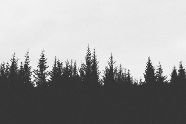 Silhouette of trees at dusk, trees, pines, sunset, dusk, dark, cold, forest
