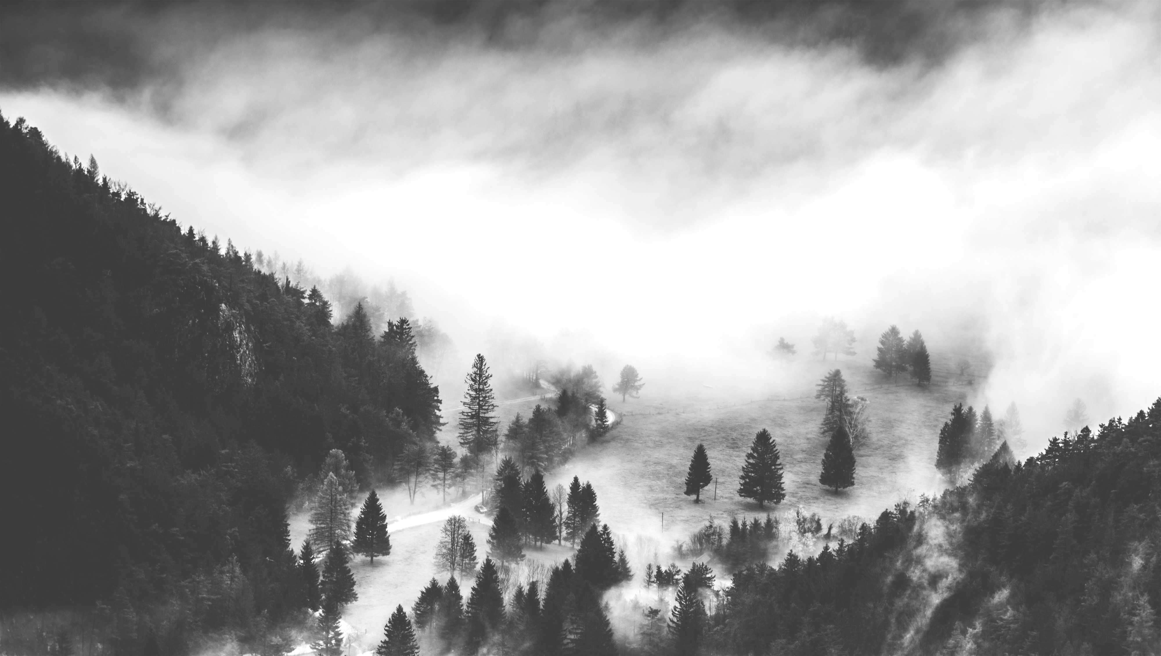 Fog in the mountains, forest, mountains, trees, pines, fog, smoke