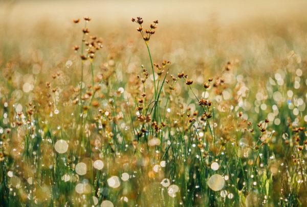 Wildflowers, freedom, outside, field, nature, flowers, plants, grass, field, nature, sunshine