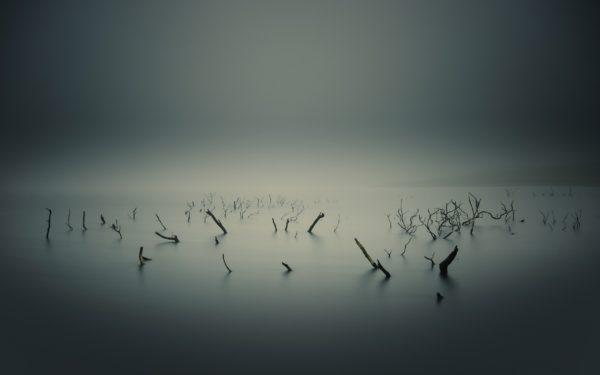 Fog on Lake Eerie, dark, quiet, still, branches, trunks, water, fog, gray