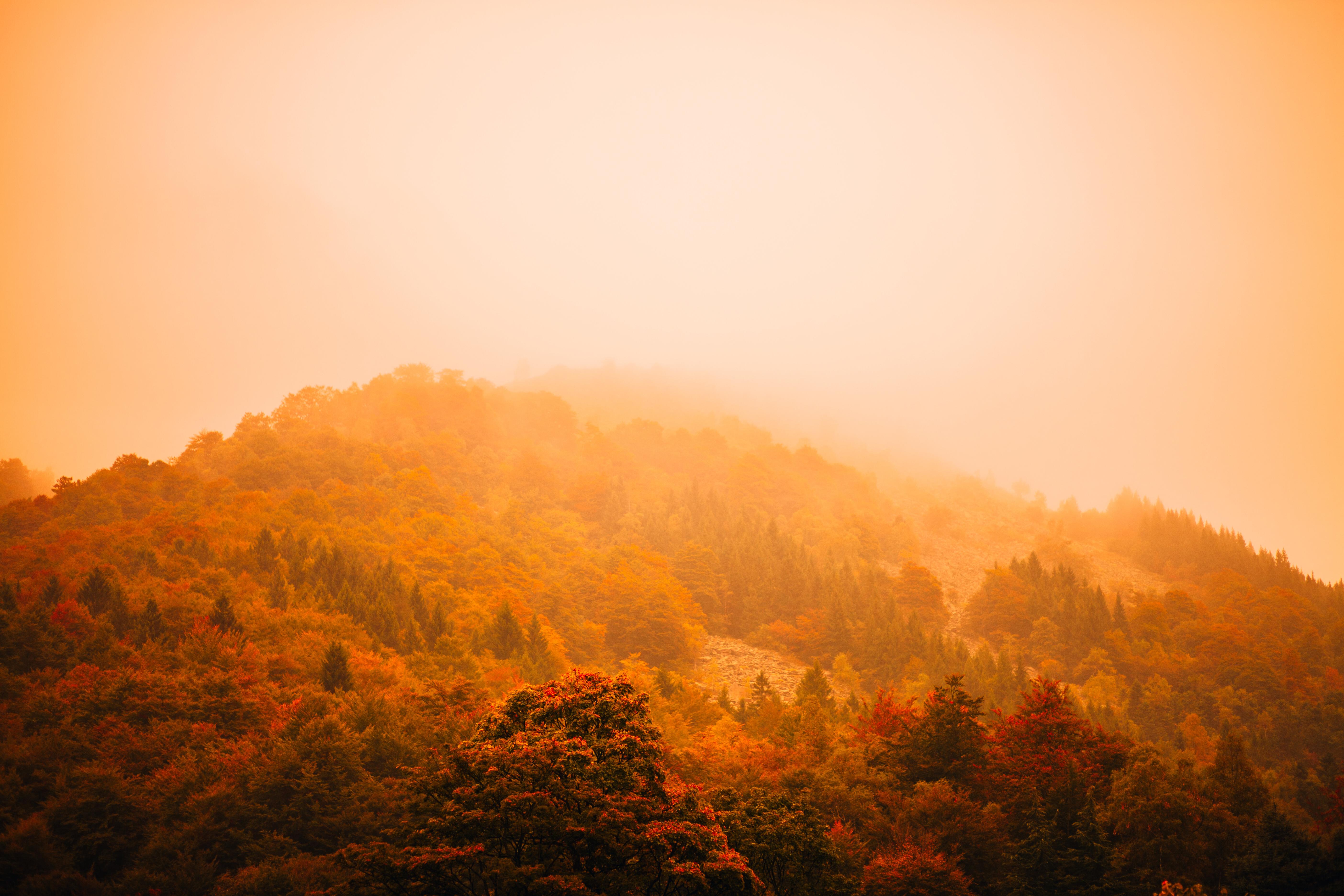 Autumn Fog, cold, autumn, trees, yellow, golden, mist, yellow trees, tree tops