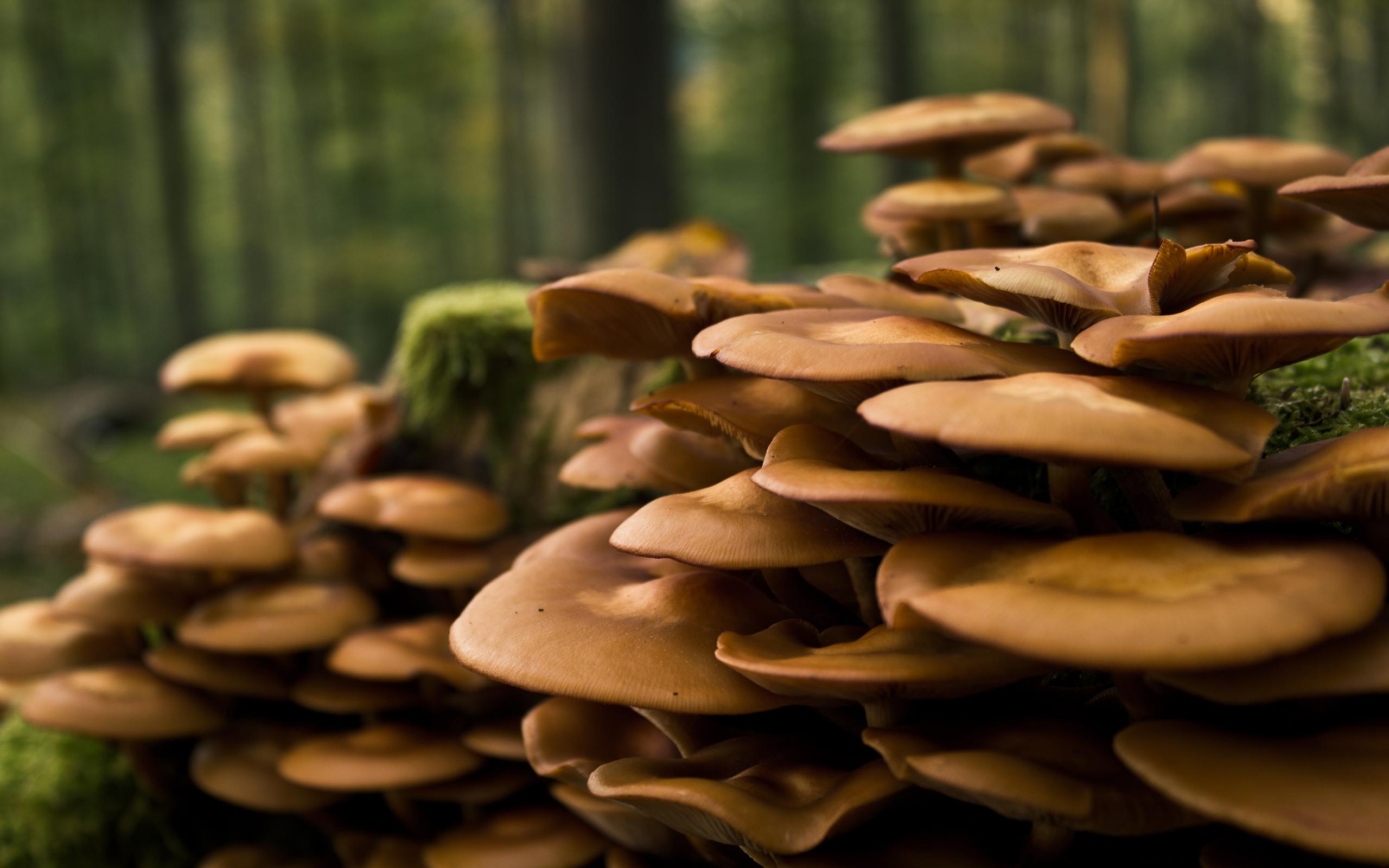 Mushrooms by MrFolder, fungi, nature, forest, trees, vegetation, outside, mushrooms