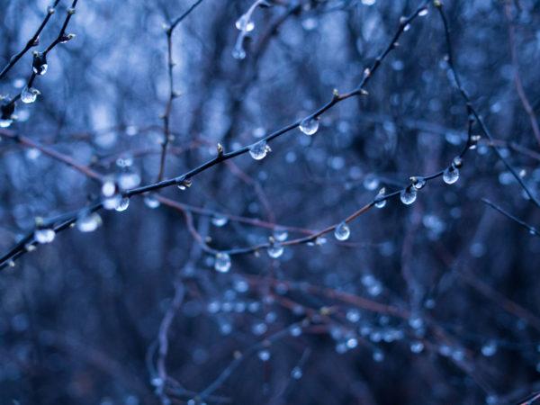 Raindrops on nature, rain, branches, trees, rain drops, wet, branches, trees, forest, woods, nature, dark, blue