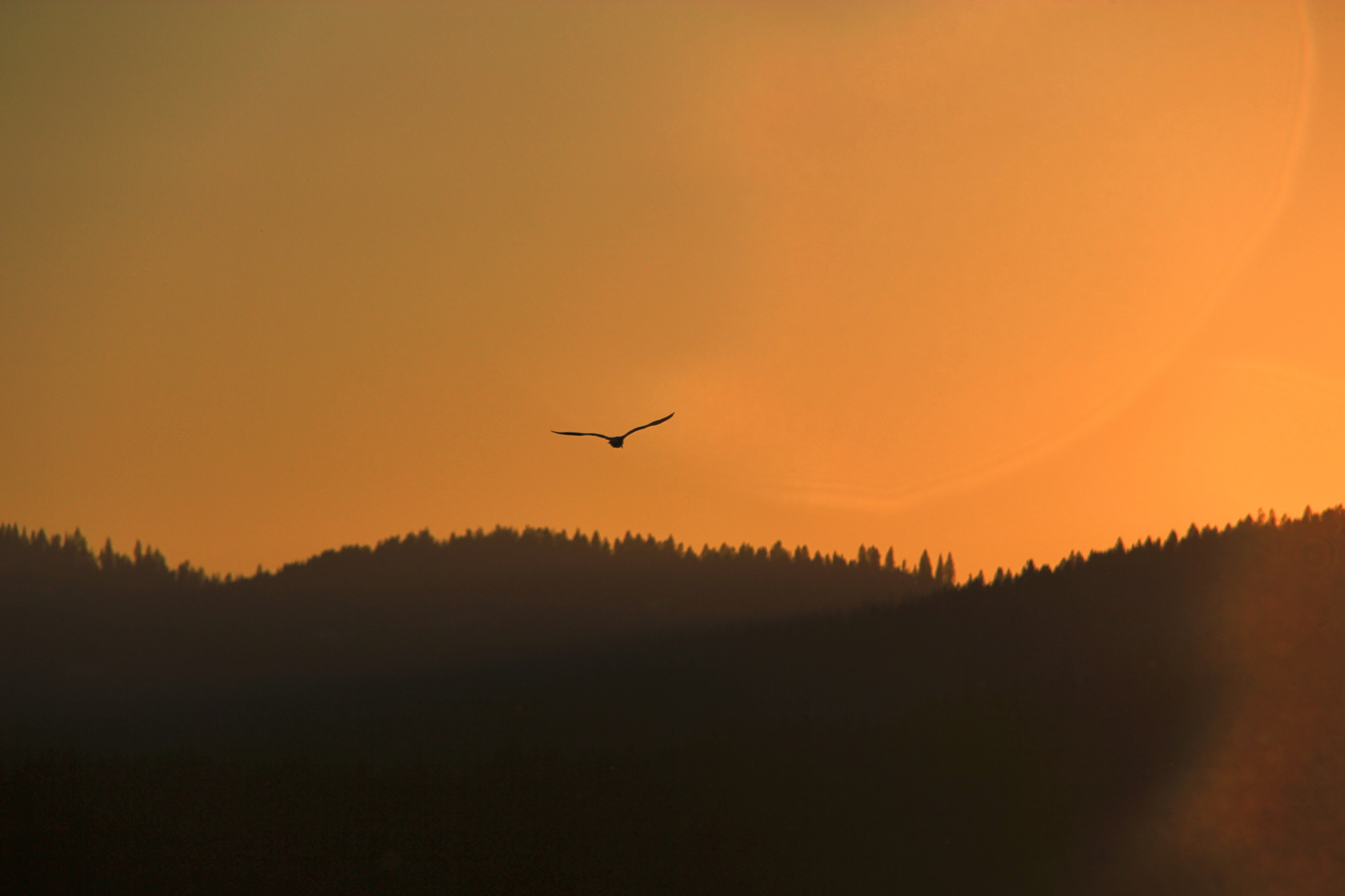 Freedom in the hills, mountains, trees, forest, sunset, flight, flying, bird, mountain