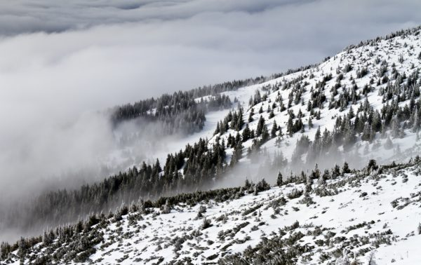 Snow on the mountain, forest, pine, snow, cold, fog, clouds, fog, mountain, snow