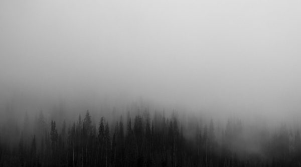Trees in the fog, forest, mist, fog forest, trees, forest, woods, fog, foggy, gray, sky, nature
