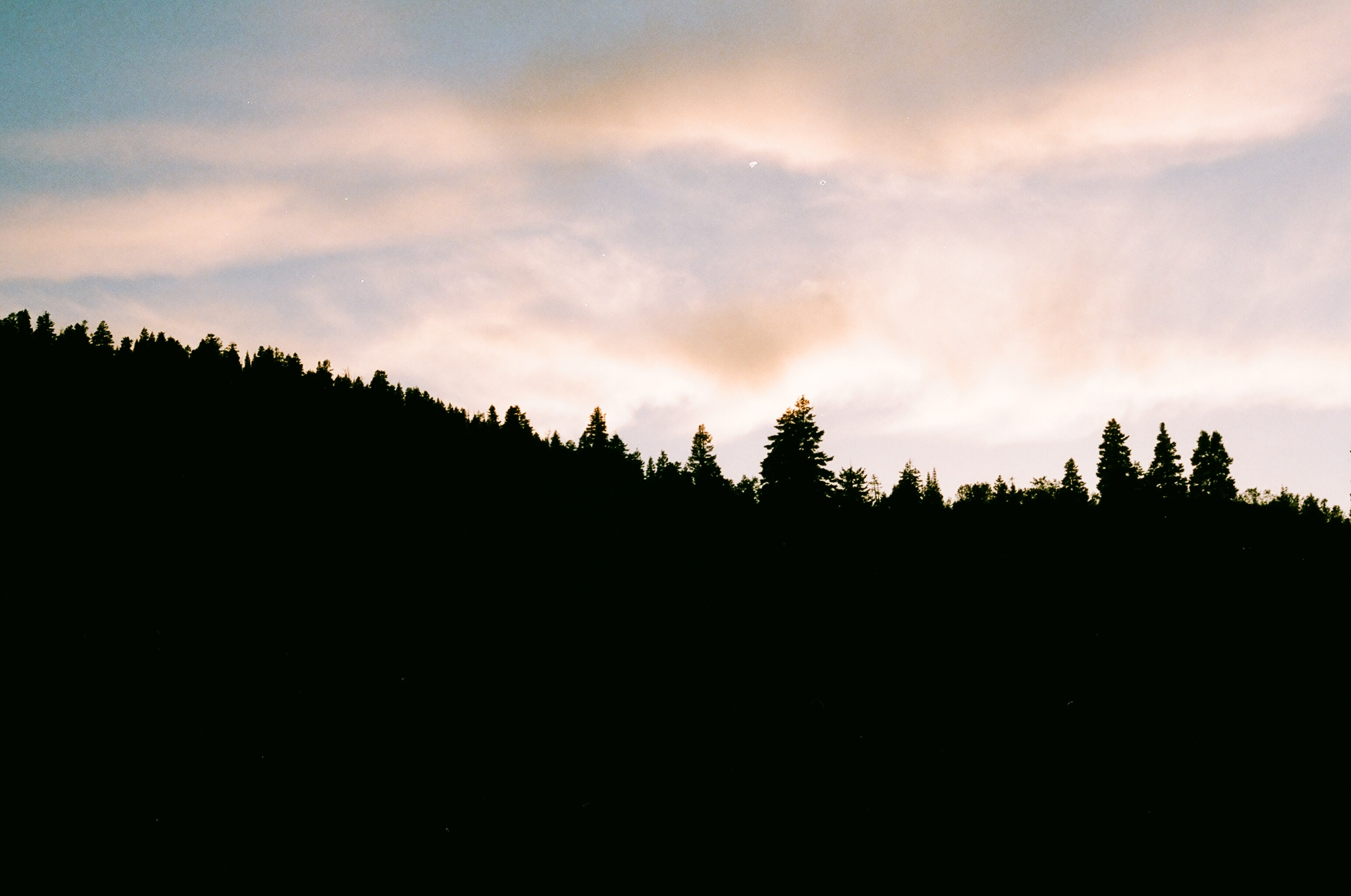 Silhouette of pine trees at sunset, sunset, pine, forest, sky, silhouette, nature