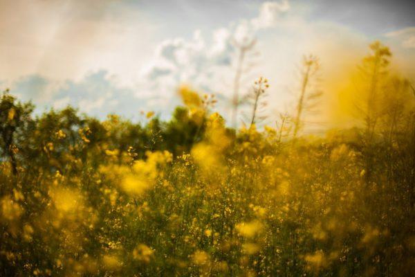 Outdoors, field, nature, outside, freedom, freshness, vegetation, plants