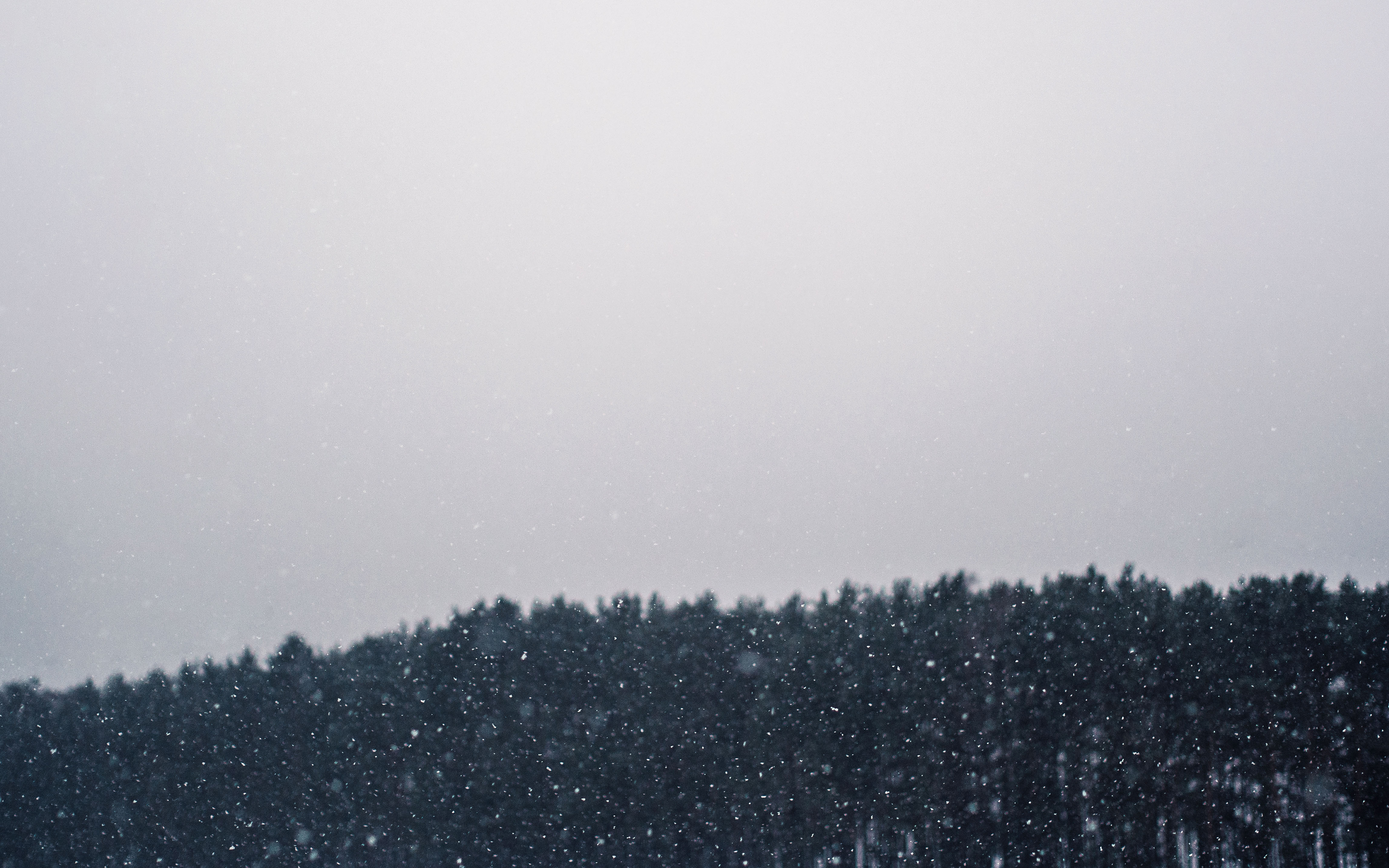 Winter drizzle, rain, winter, trees, pines, forest, mountains