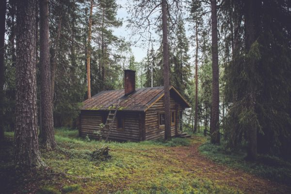 Cabin in the woods, nature, freedom, harmony, forest, trees, pines, outside, green, fio, logs