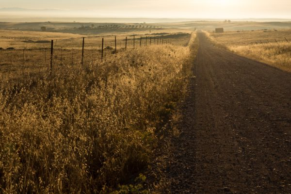 Country road, countryside, sunset, sunrise, golden, sun, sunlight, dirt road, road, freedom, nature