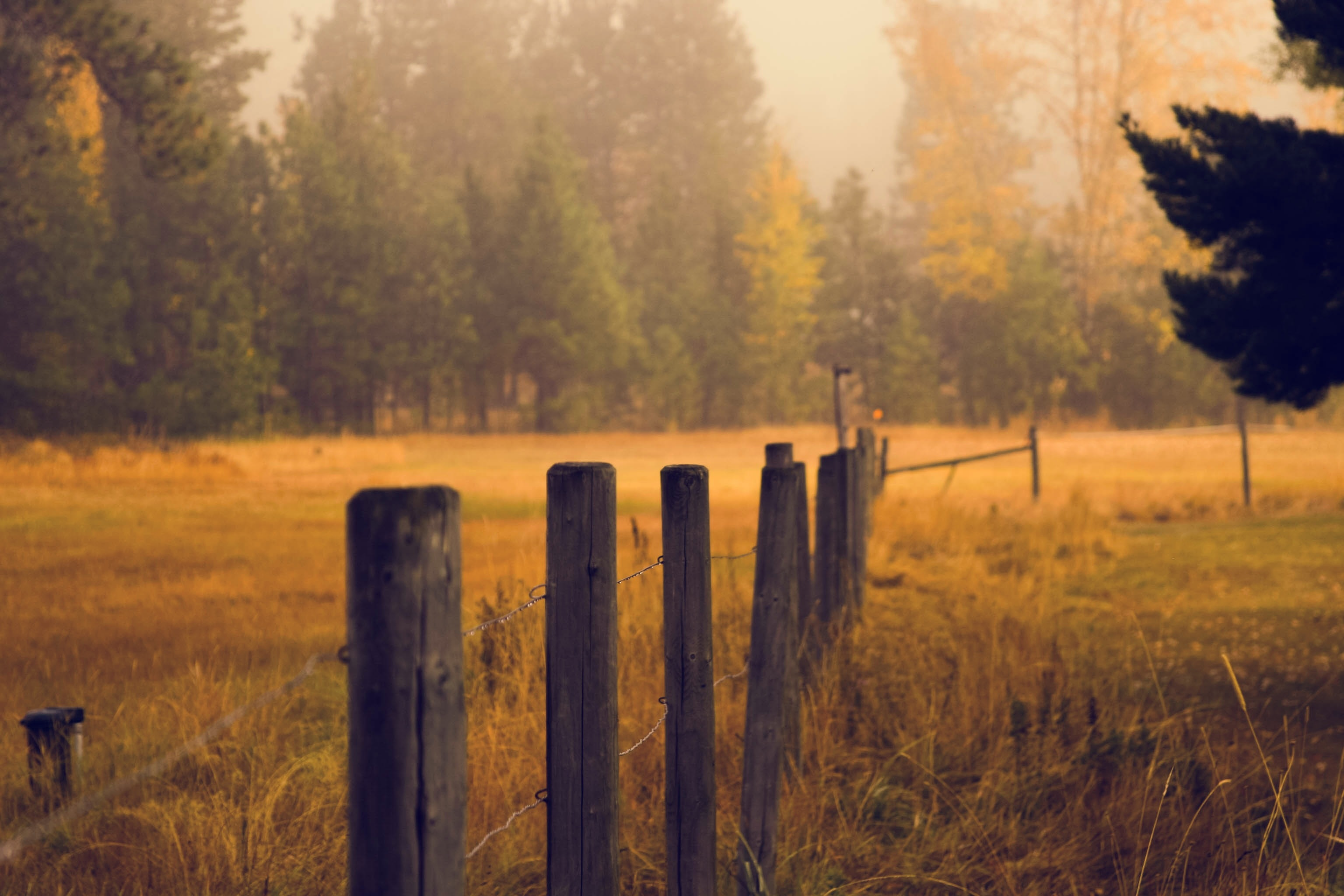 Field fence, field, poles, wire, fence, nature