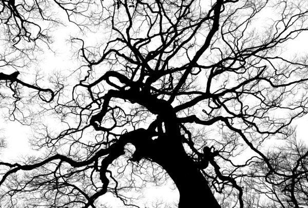 Silhouette of tree branches, tree branches, glass, shadow, veins, nerves